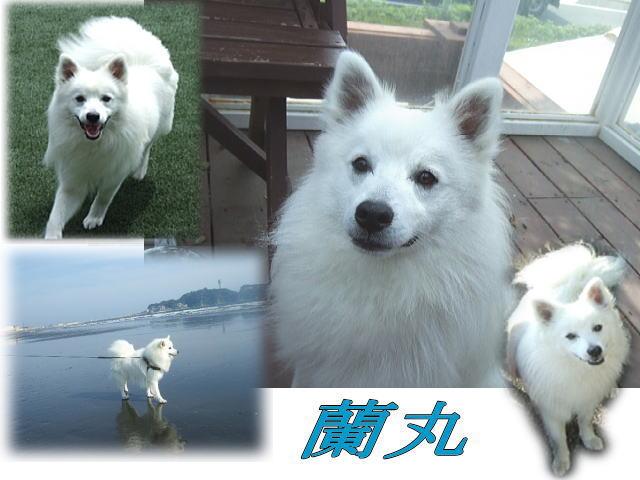 Shounan4