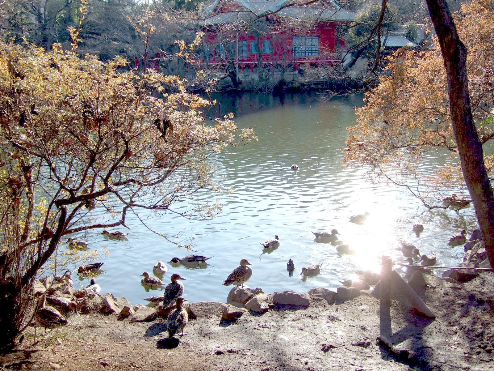 2006_0107kichijyouji0226
